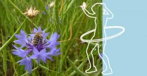 Konblume und Mädchen beim Hulahoop
